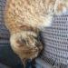 猫の認知症は何歳から?治療方法は?